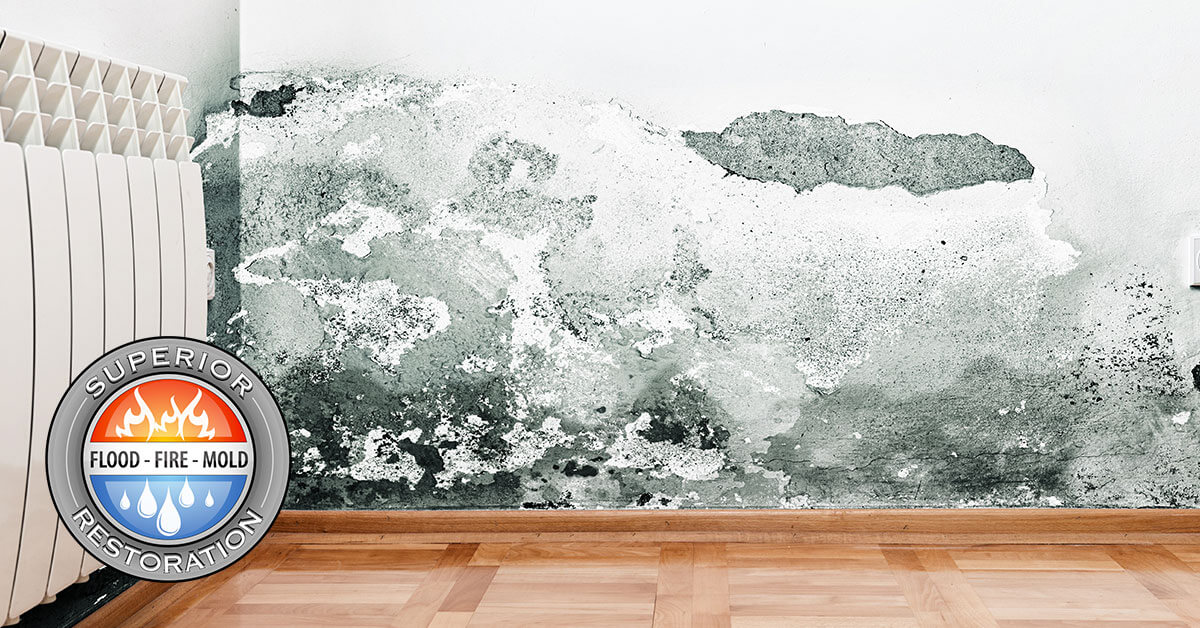 Mold Damage Restoration in Orange County, CA