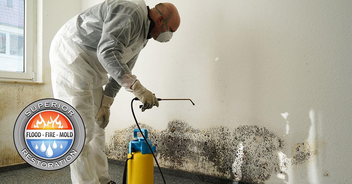 Mold Damage Restoration in Vista, CA