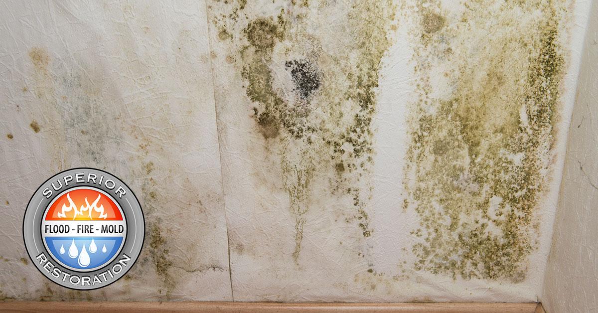 Mold Damage Restoration in Anaheim, CA