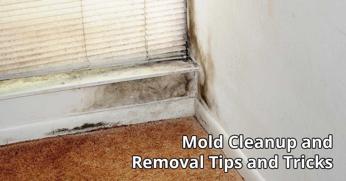 Mold Damage Restoration Tips in National City, CA