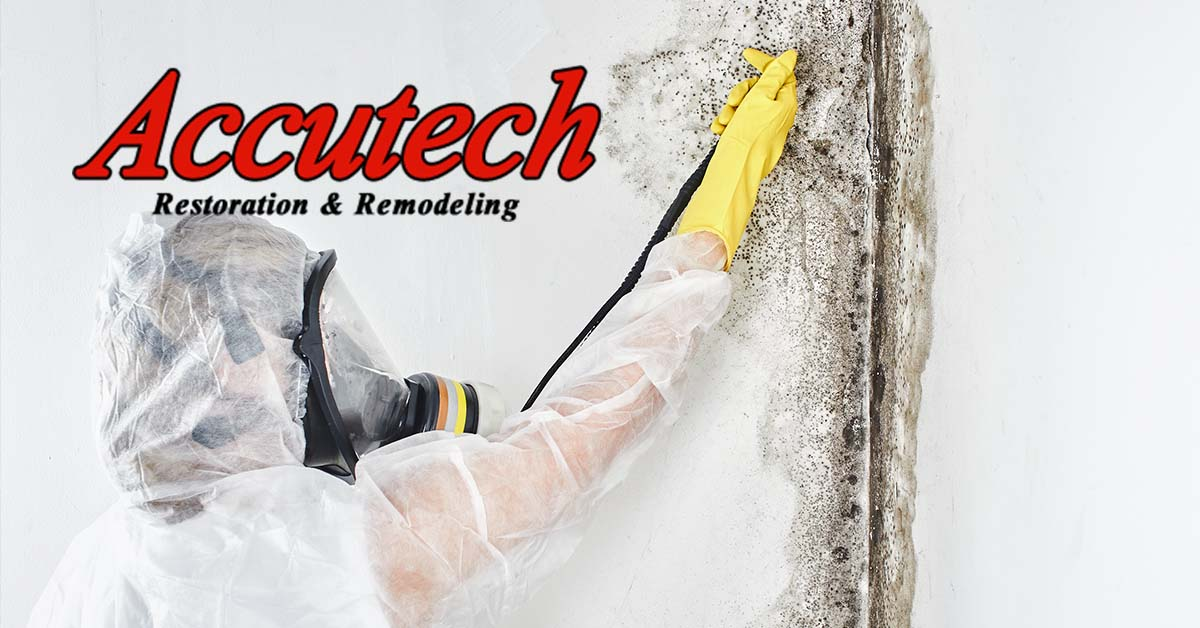 Mold Abatement in Venice, FL
