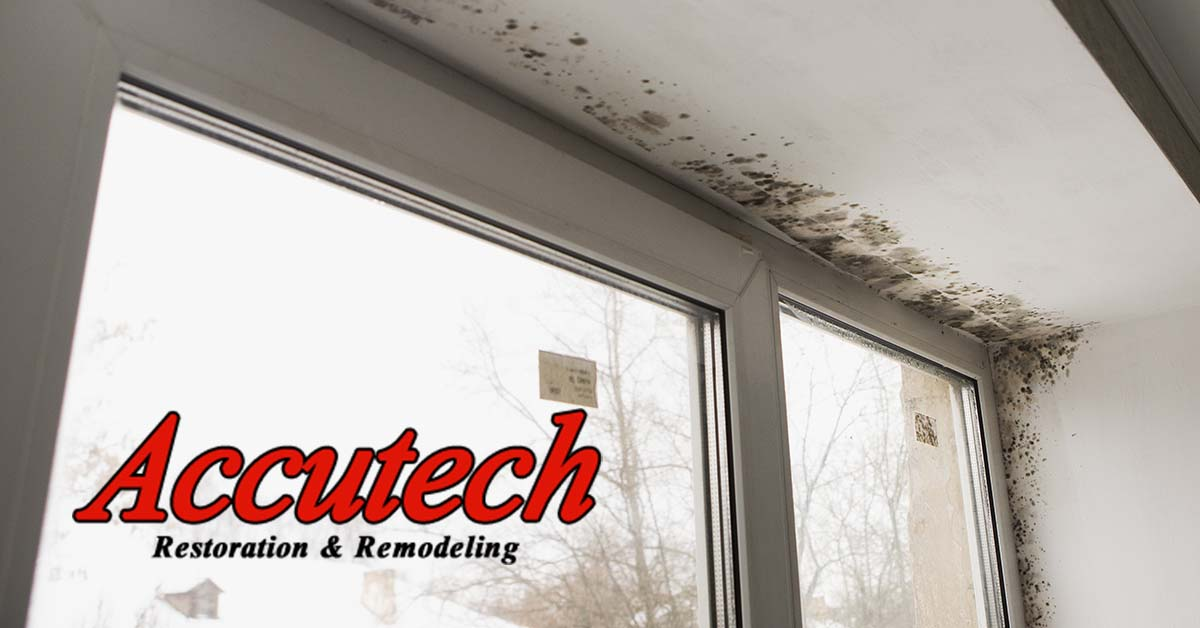 Mold Removal in Lakewood Ranch, FL