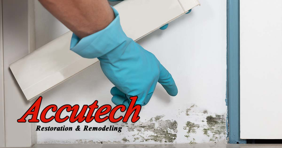 Mold Remediation in Lakewood Ranch, FL