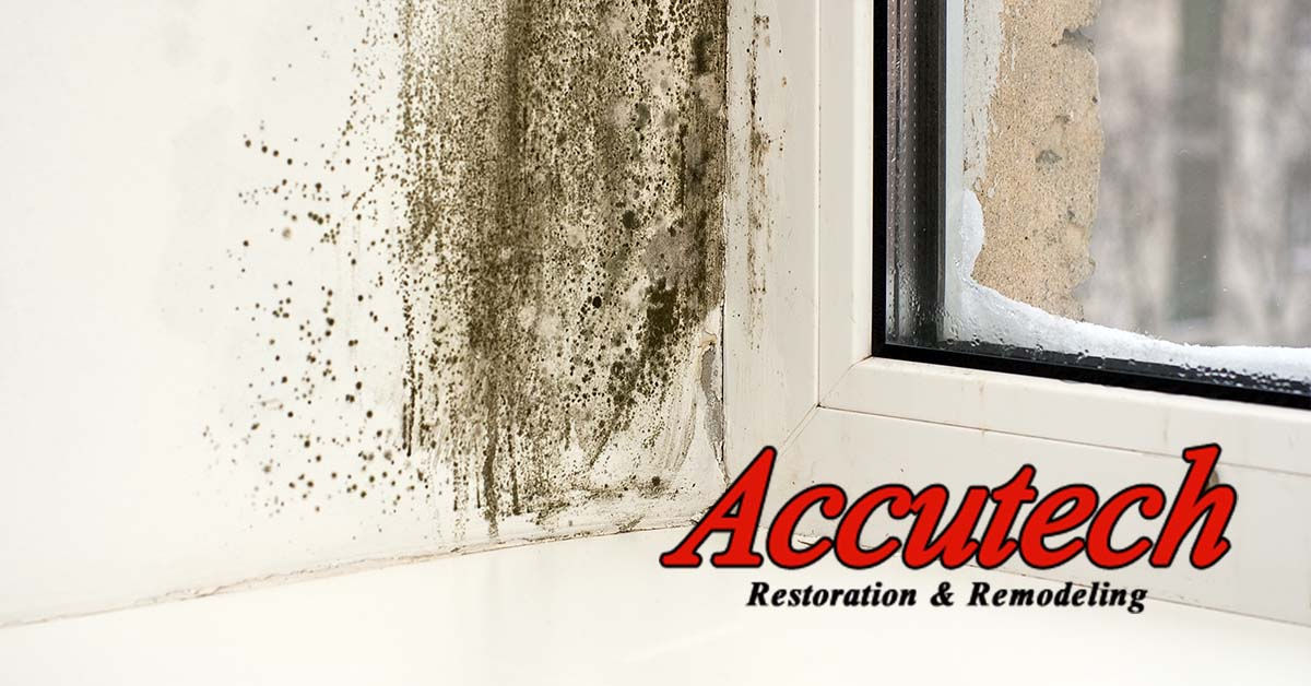 Mold Remediation in North Port, FL