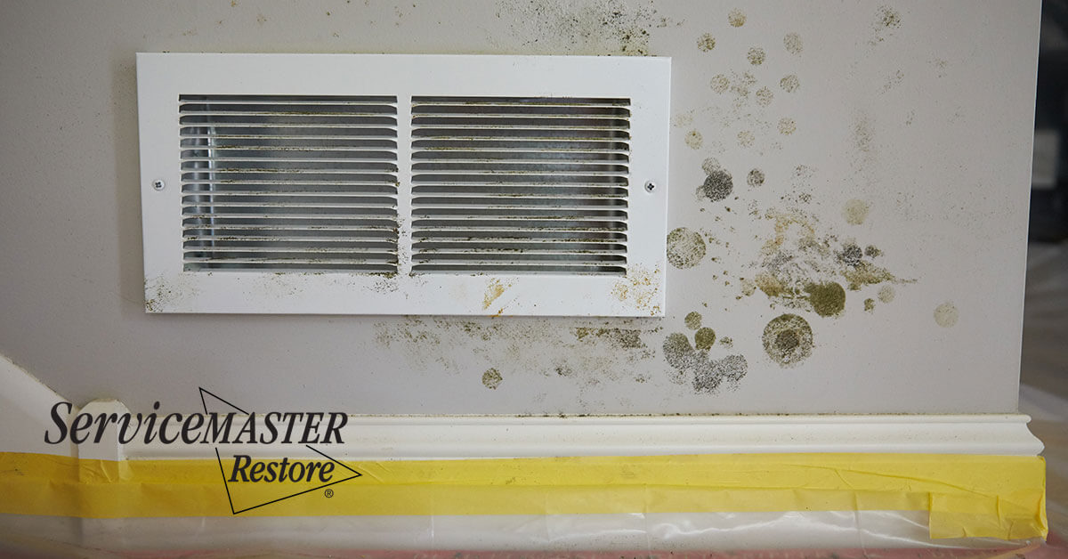 Professional Mold Removal in Rancho Murieta, CA