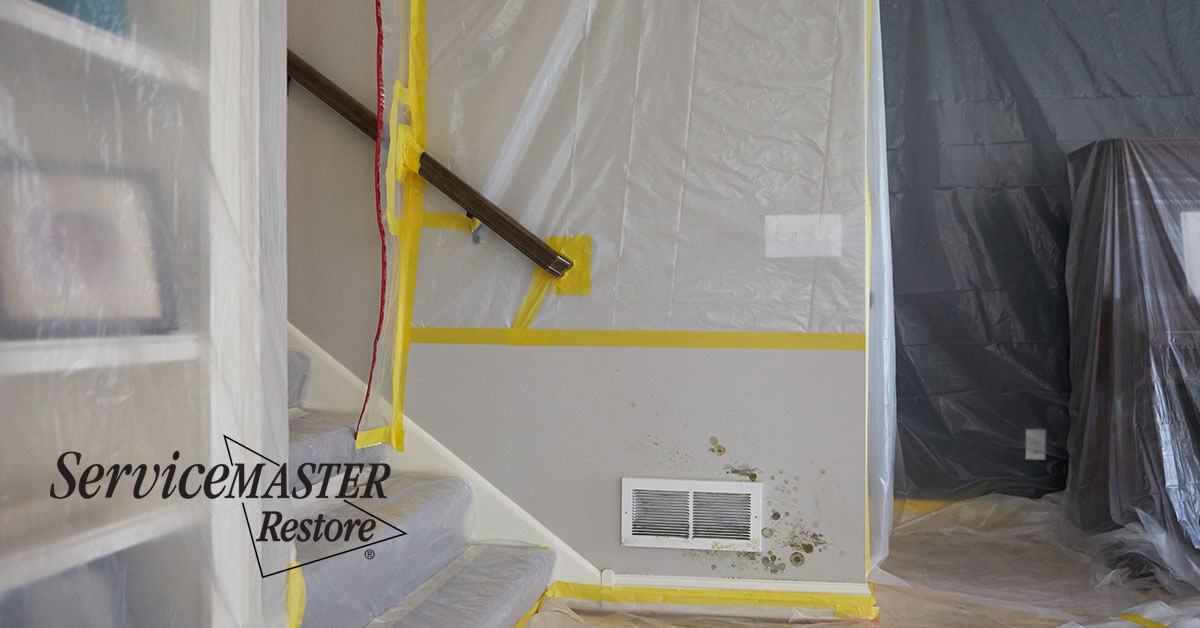 Professional Mold Remediation in Davis, CA