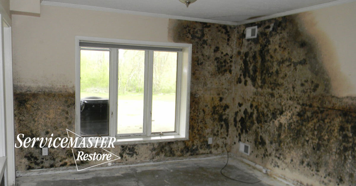 Professional Mold Removal in Plainfield, CA