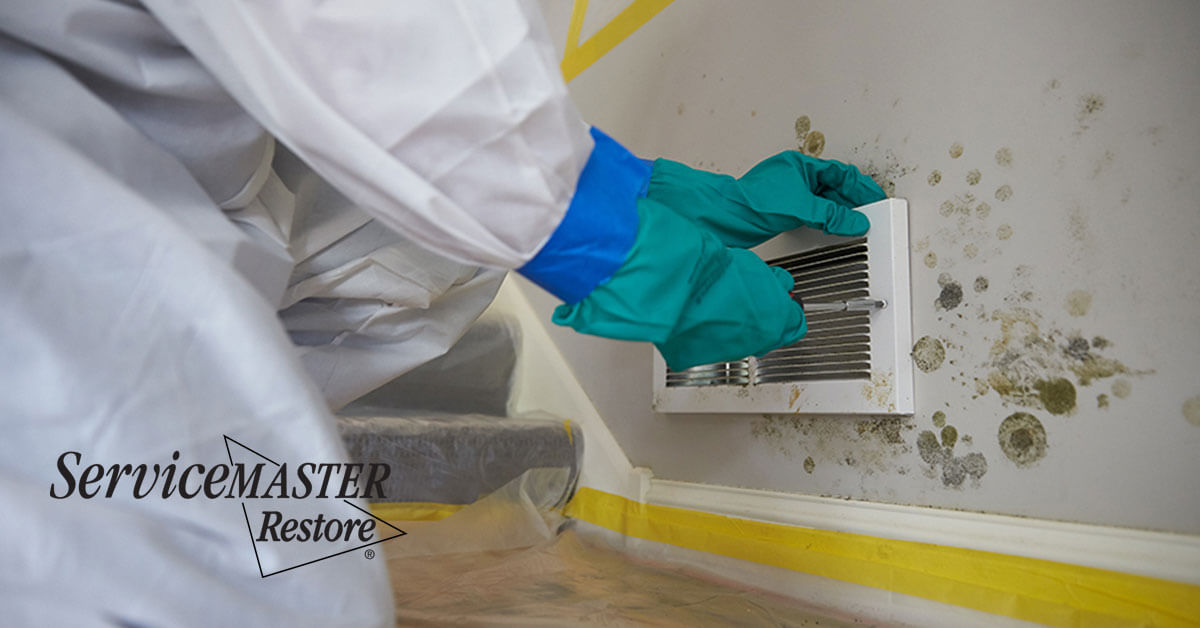 Certified Mold Remediation in Rosemont, CA