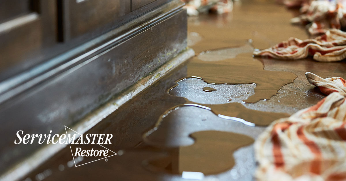 Professional Water Damage Cleanup in Woodland, CA