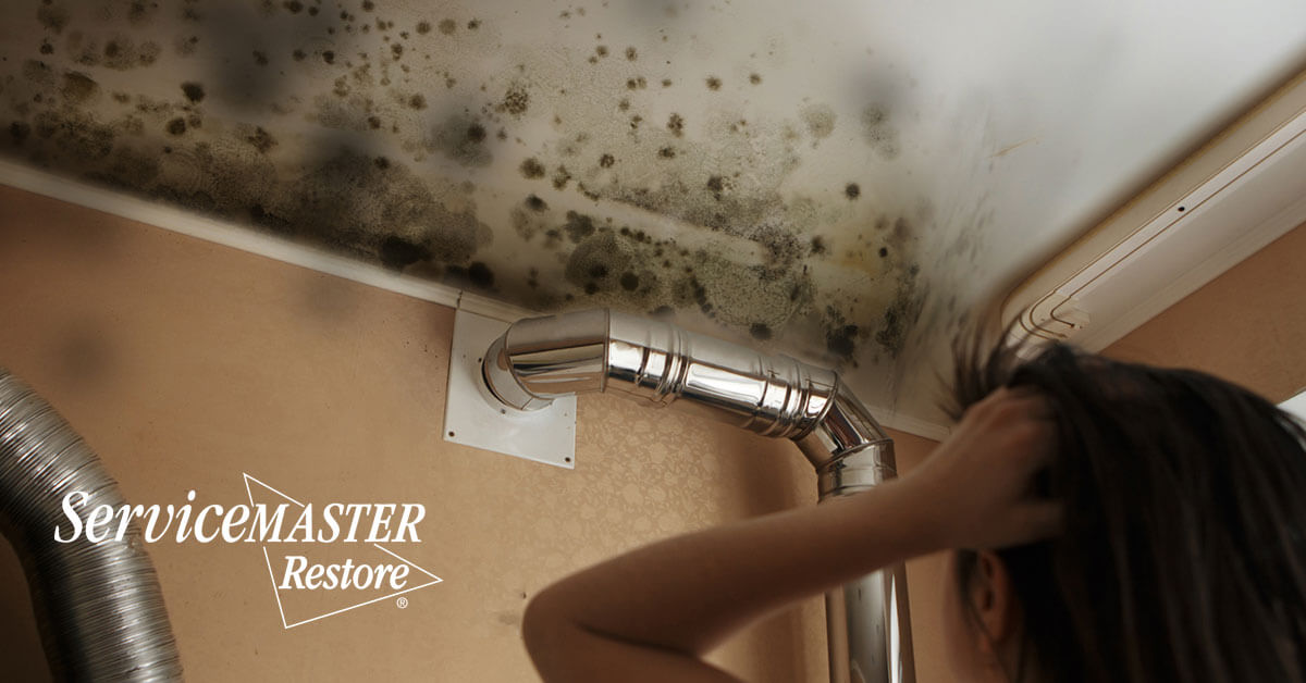 Professional Mold Removal in Elverta, CA