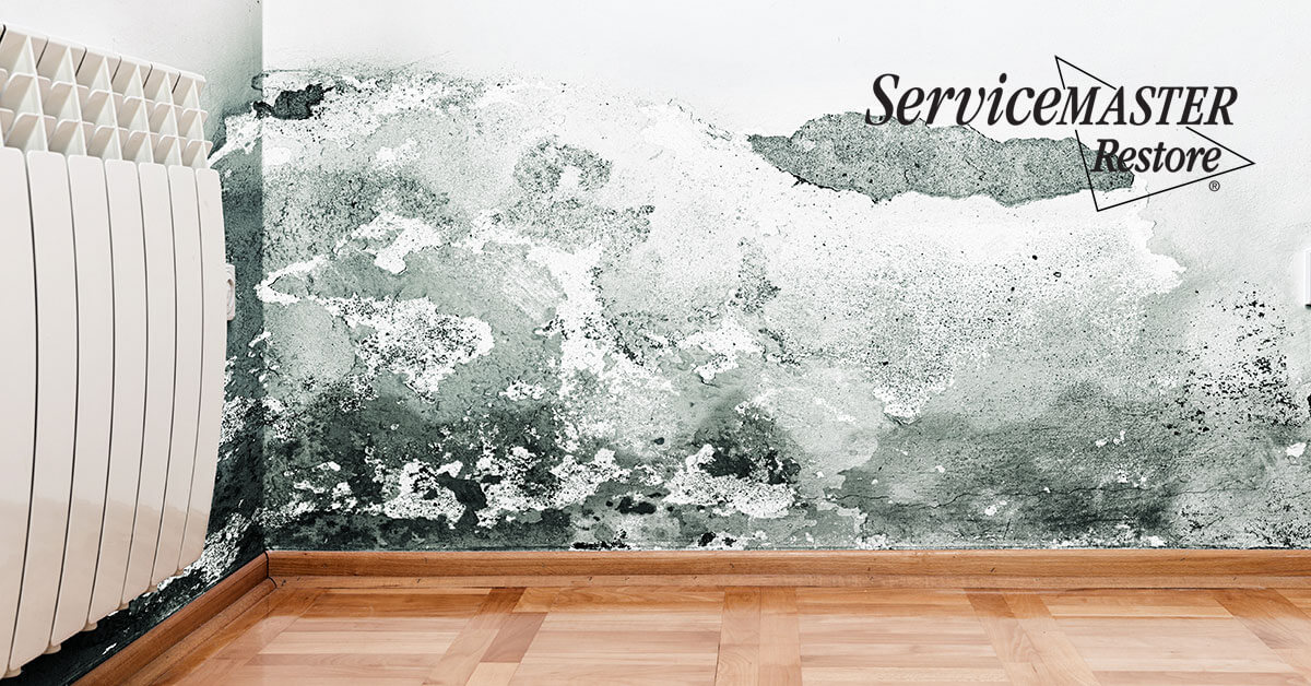 Certified Mold Removal in Folsom, CA