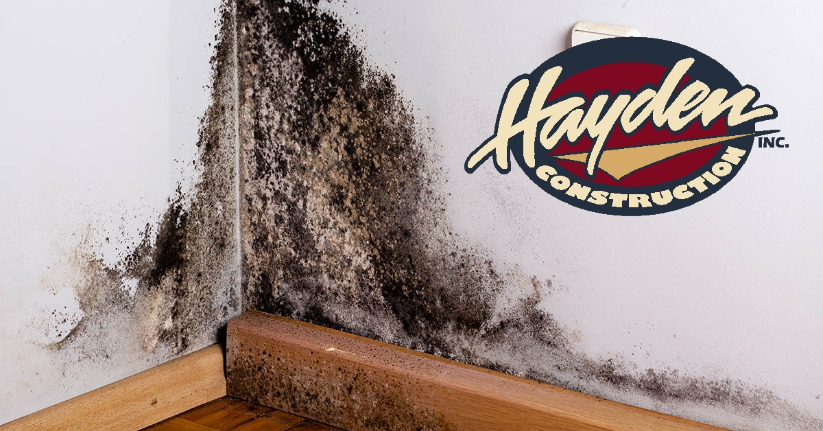 Mold Removal in Carthage, NC