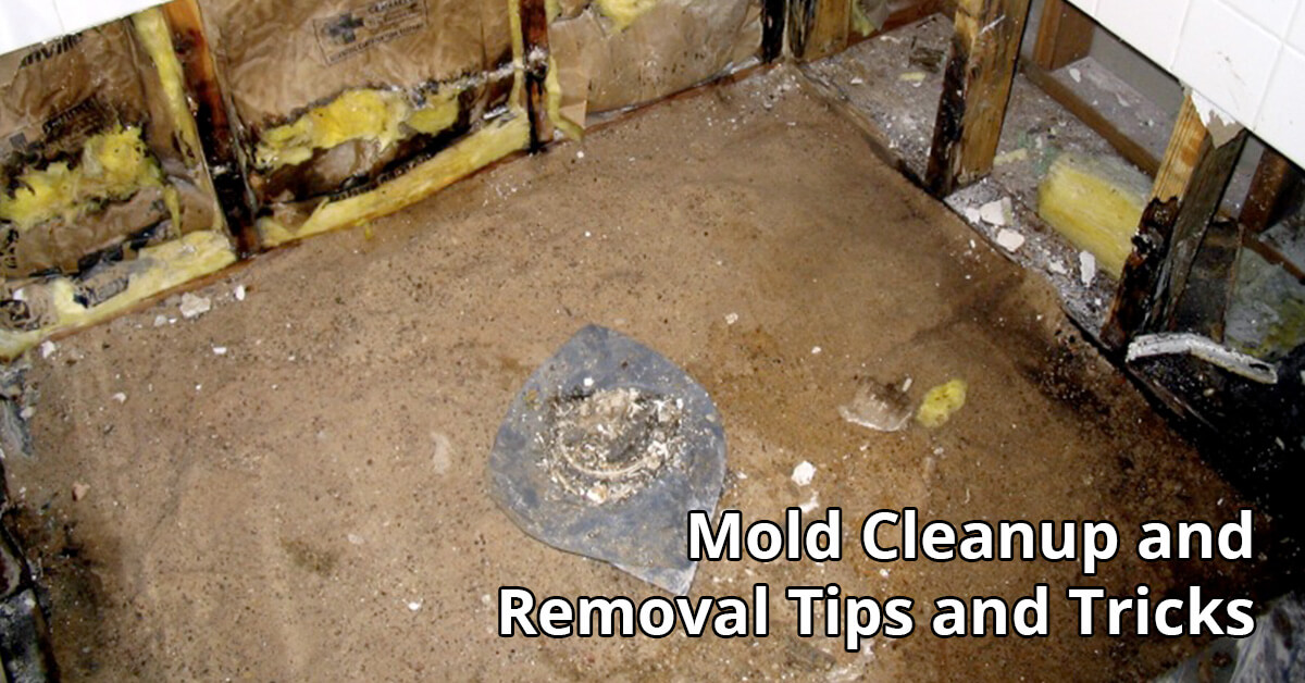 Mold Removal Tips in Owosso, MI