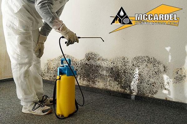 Certified Mold Remediation in Okemos, MI