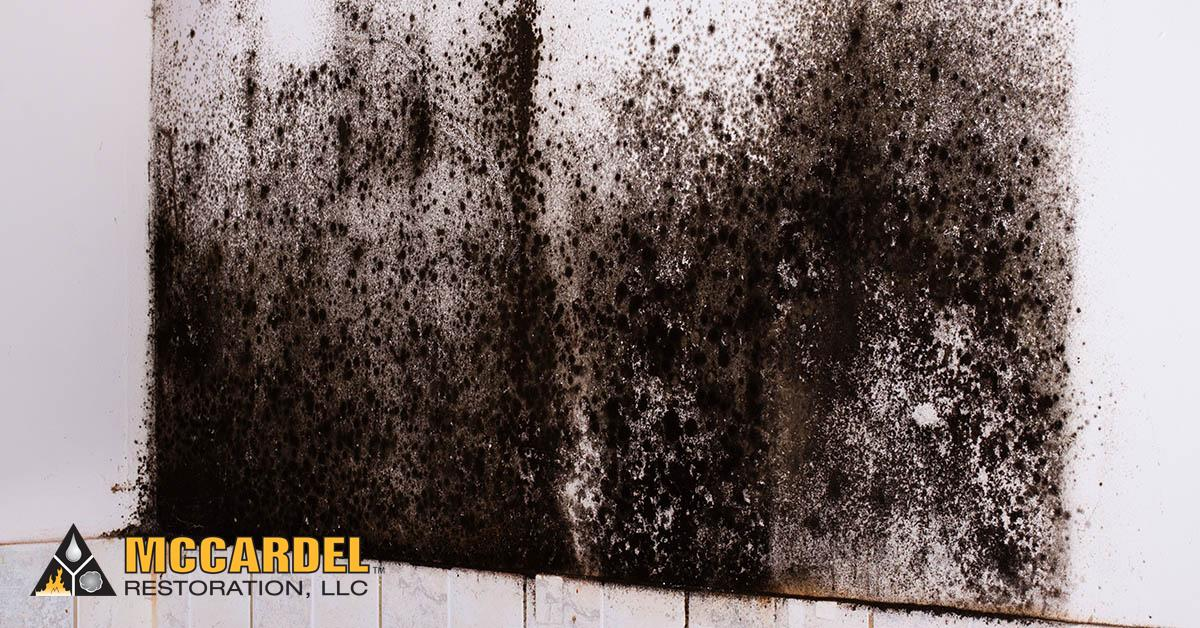 Mold Abatement in East Lansing, MI