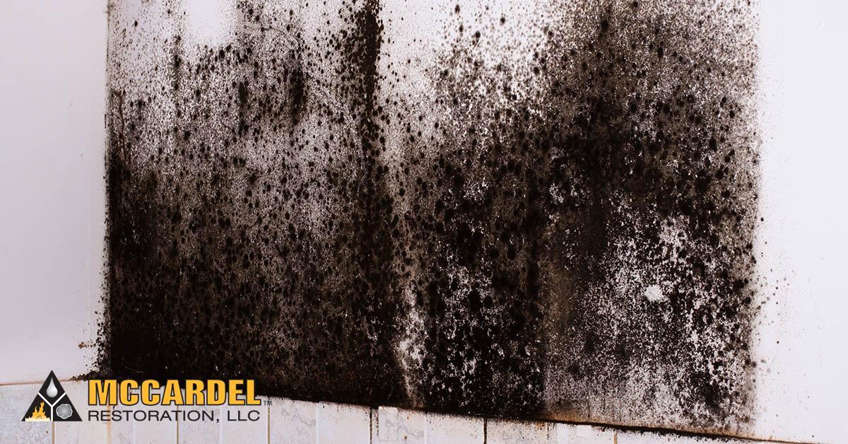 Mold Abatement in Webberville, MI