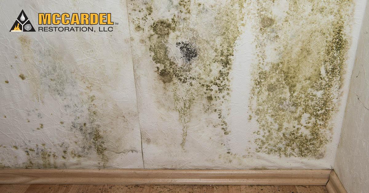 Mold Damage Restoration in Dimondale, MI