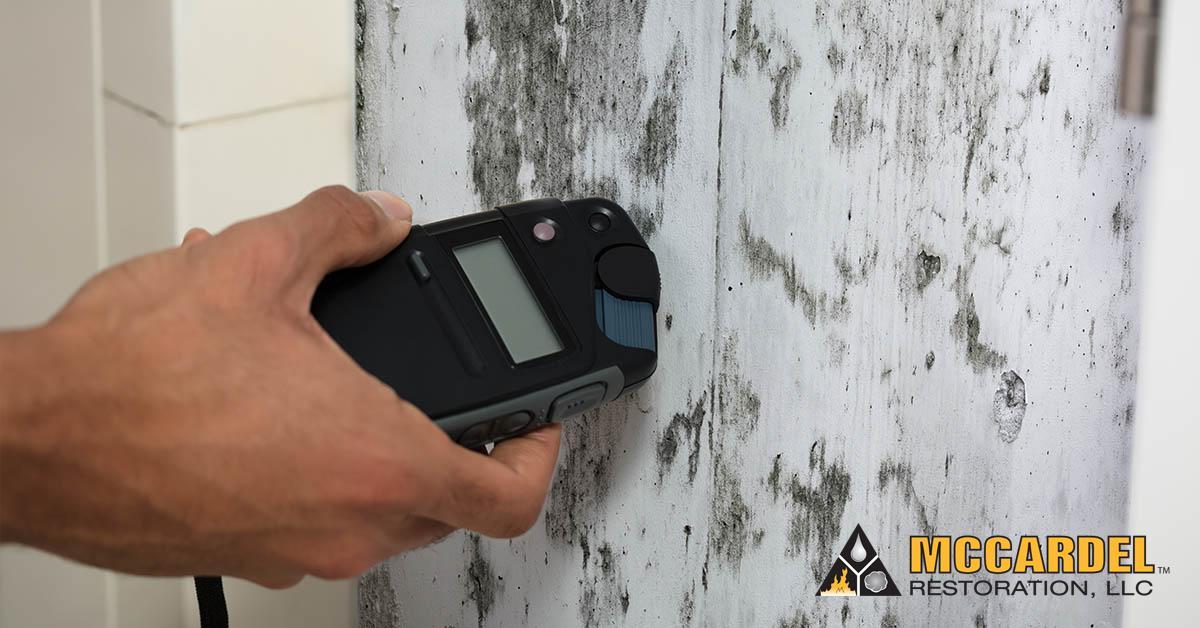 Mold Damage Restoration in Webberville, MI
