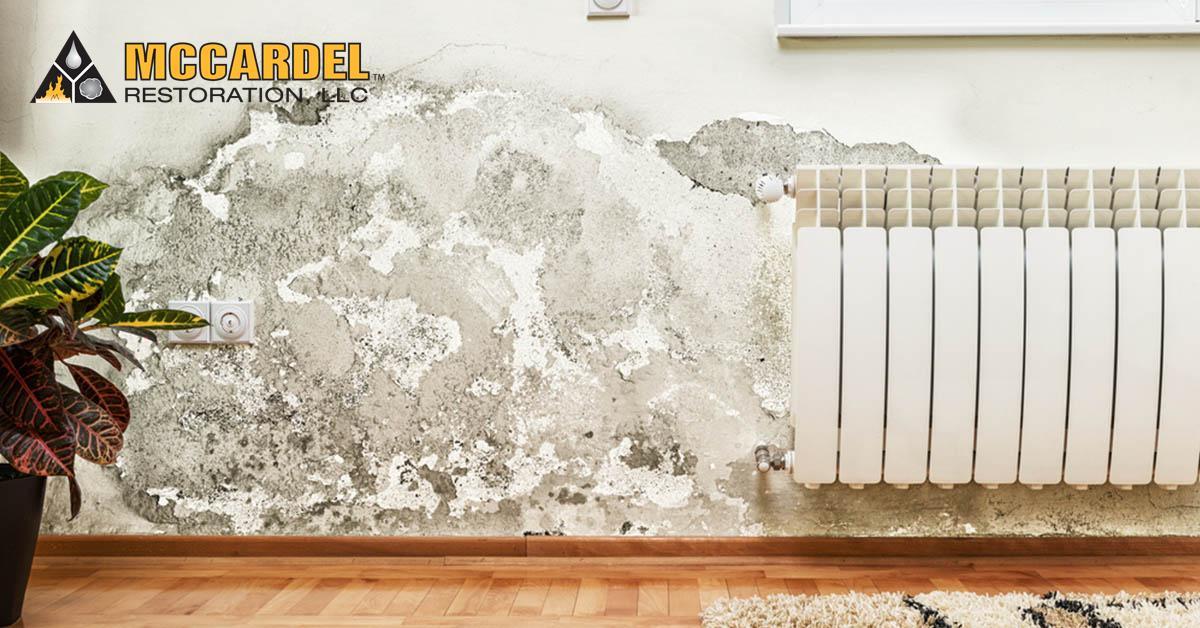 Mold Remediation in Dansville, MI