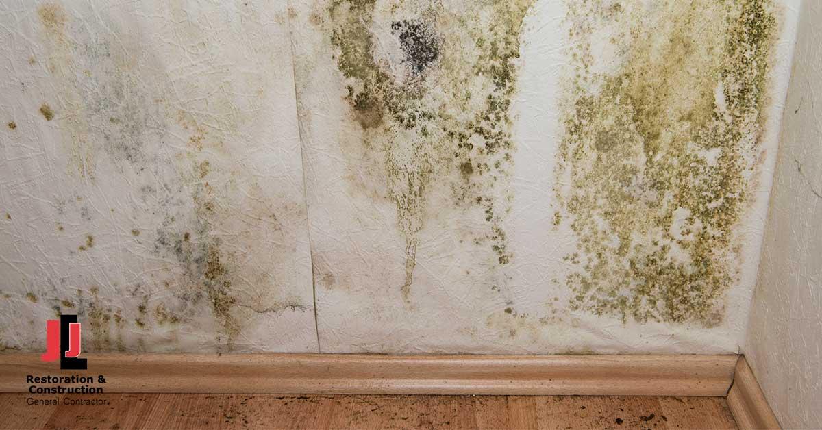 Mold Damage Restoration in Bellwood, VA