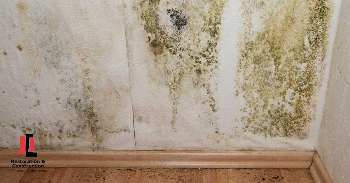 Mold Abatement in Fort Lee, VA