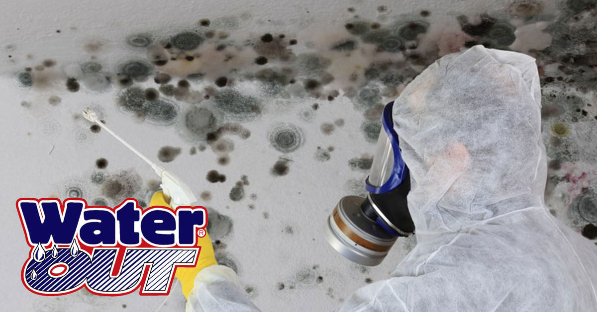 Mold Abatement in Woodburn, IN
