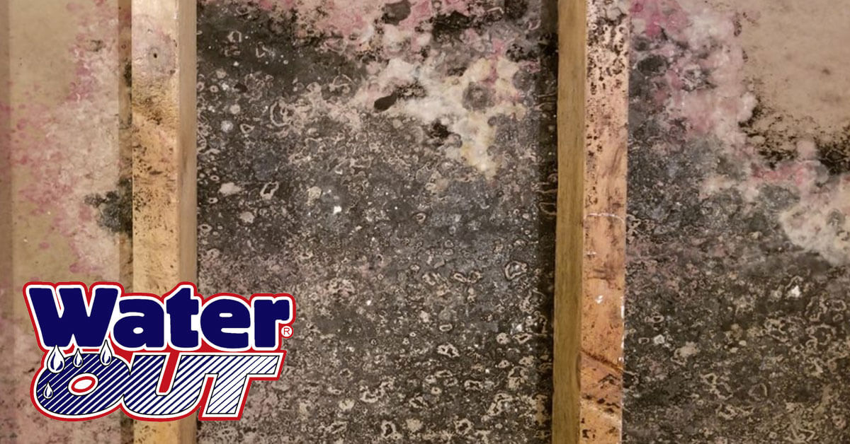 Mold Removal in Zanesville, IN
