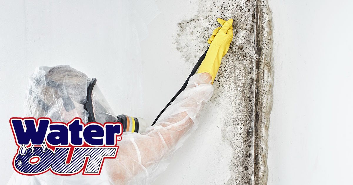 Mold Abatement in Monroeville, IN