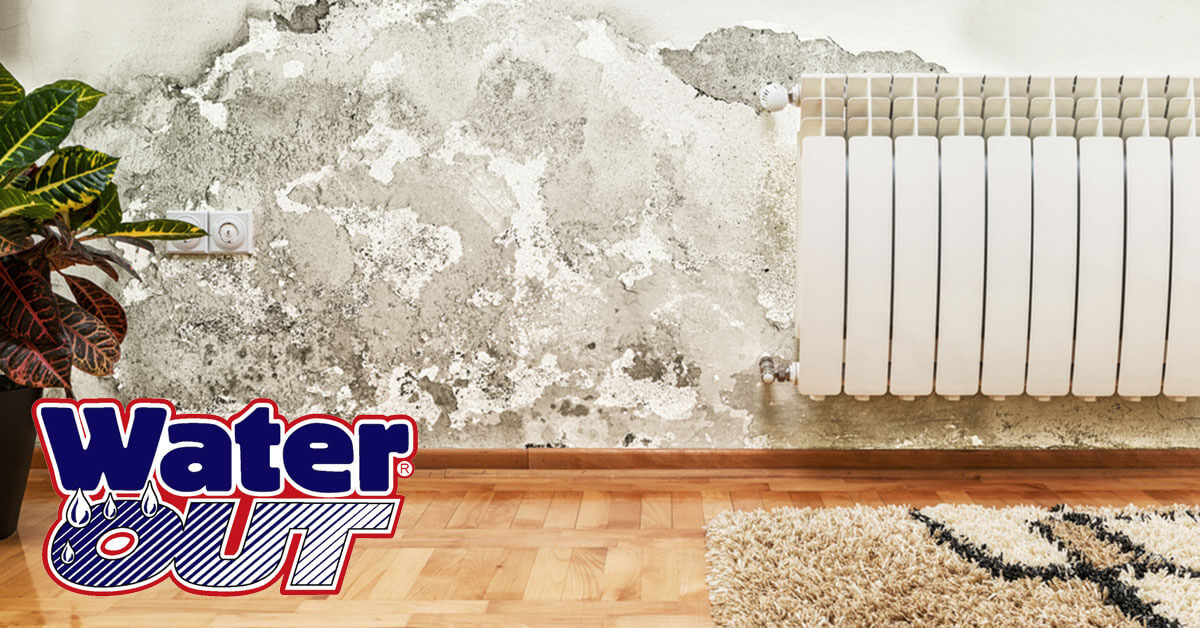 Mold Remediation in Woodburn, IN