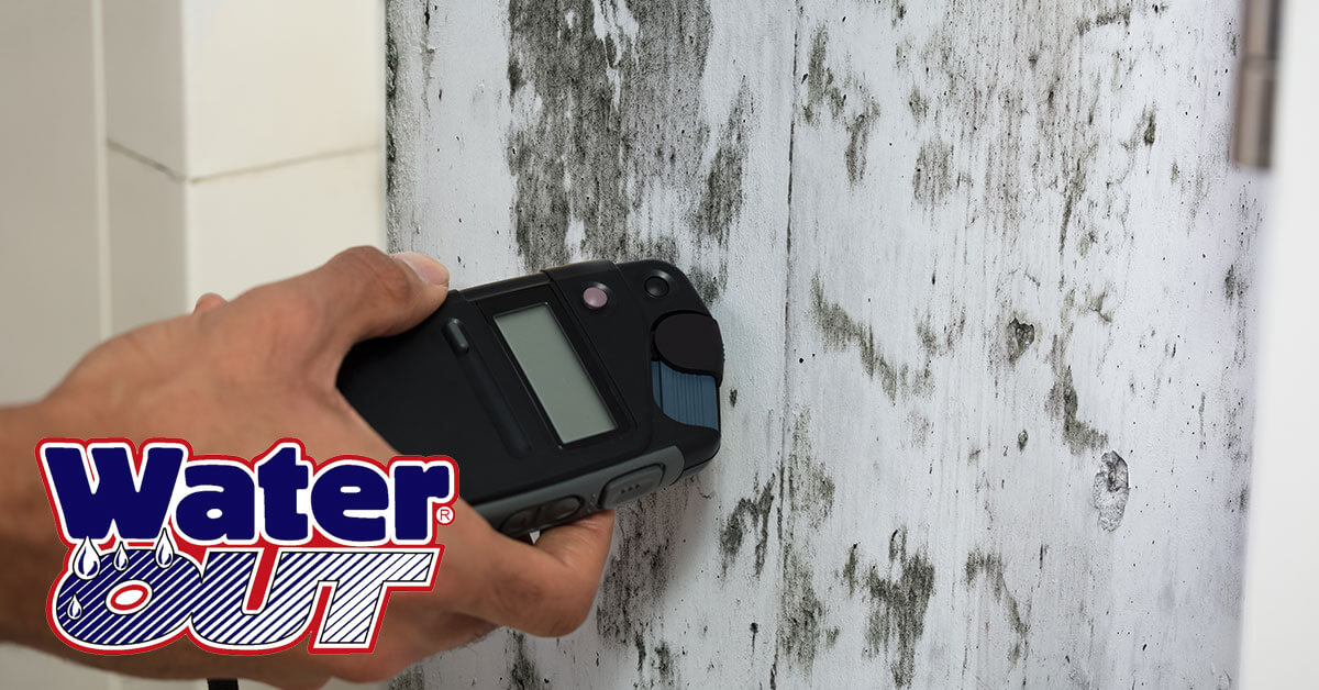 Mold Remediation in Leo-Cedarville, IN