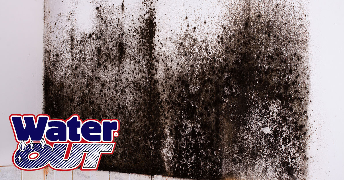 Mold Remediation in New Haven, IN