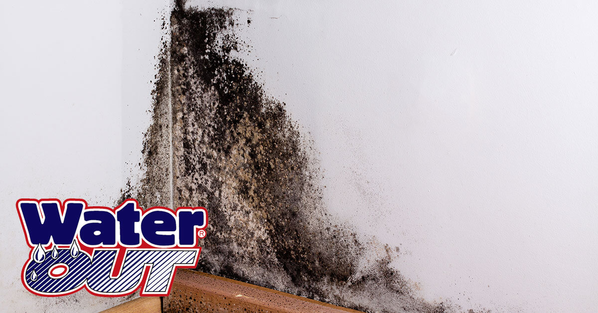 Mold Removal in Monroeville, IN