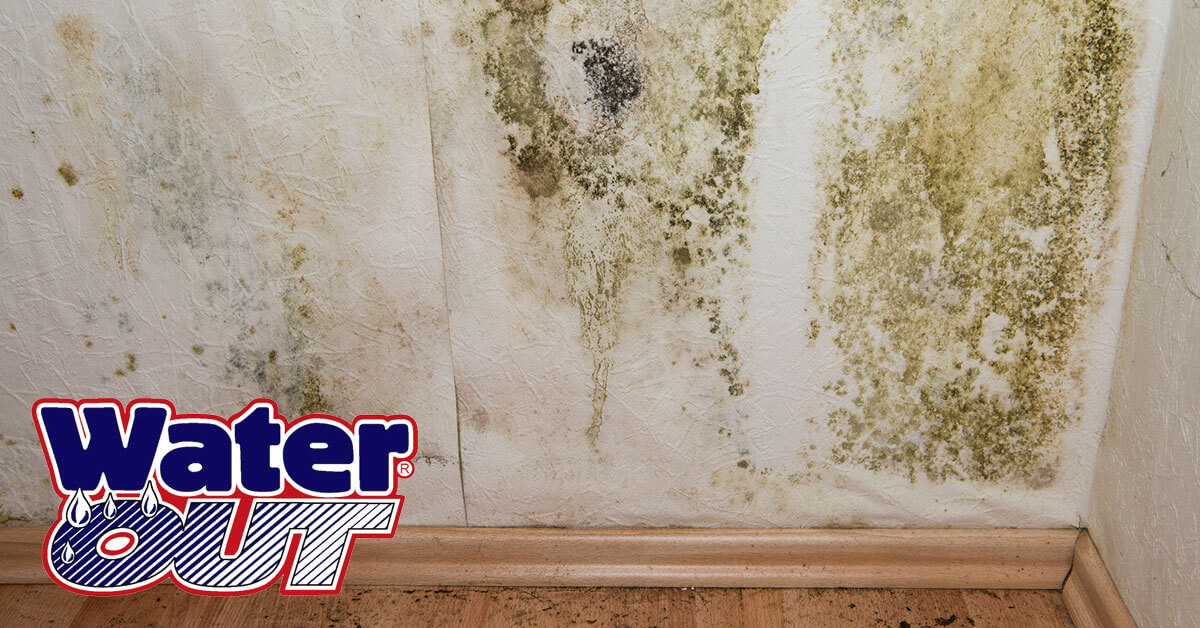 Mold Removal in Leo-Cedarville, IN