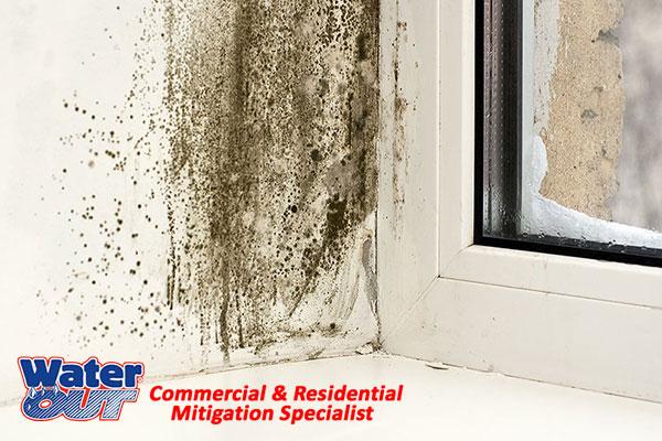 Professional Mold Damage Restoration in Woodburn,IN