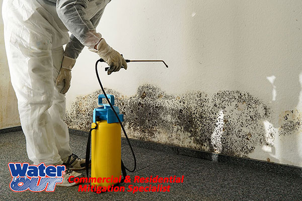 Professional Mold Remediation in Huntington,IN