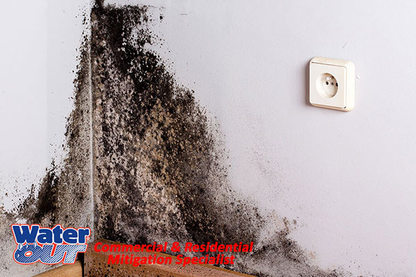 Certified Mold Removal in Zanesville, IN