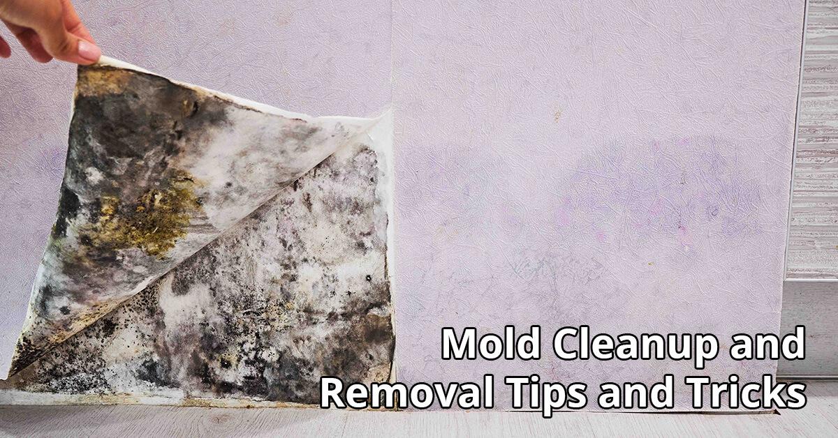 Mold Removal Tips in Zanesville, IN