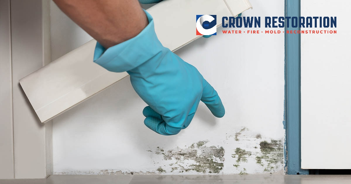 Mold Removal in Universal City Texas