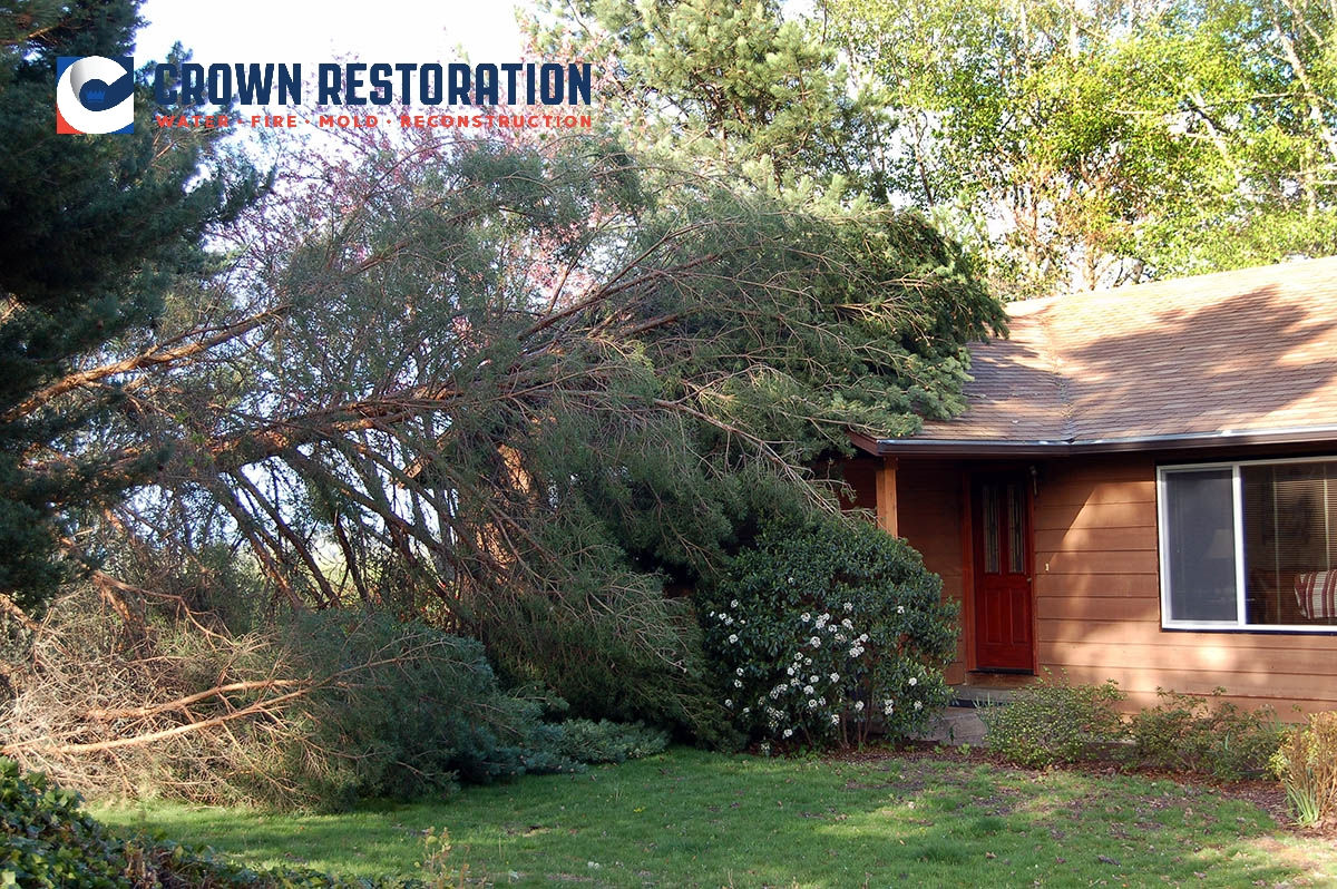 Wind Damage Repair in Hollywood Park Texas