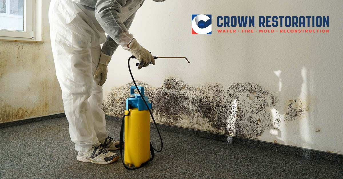 Mold Removal in Cross Mountain Texas