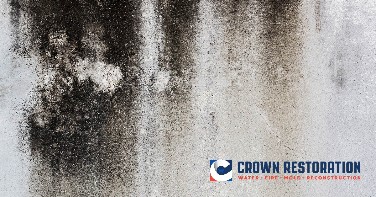 Mold Removal in Kirby Texas