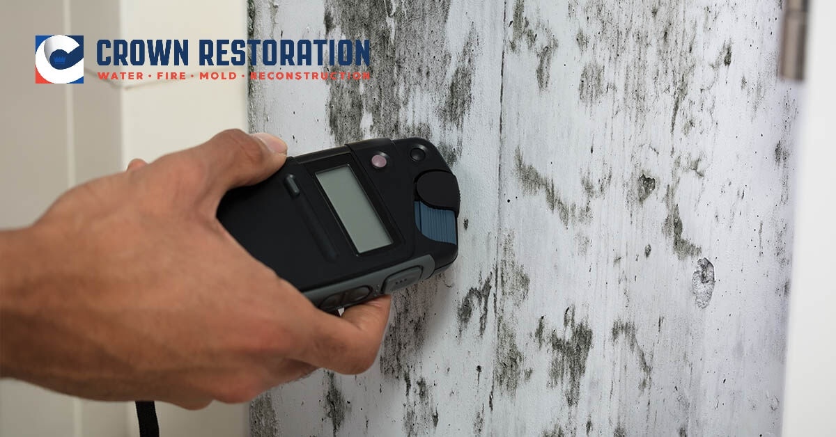 Mold Removal in Losoya Texas