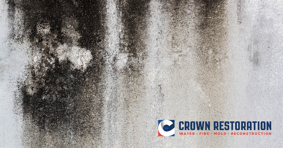 Mold Remediation in Cross Mountain Texas