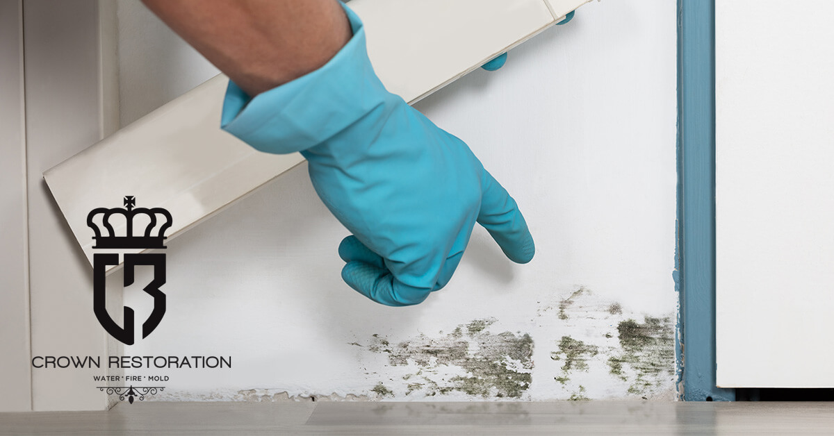 Mold Removal in Castle Hills Texas
