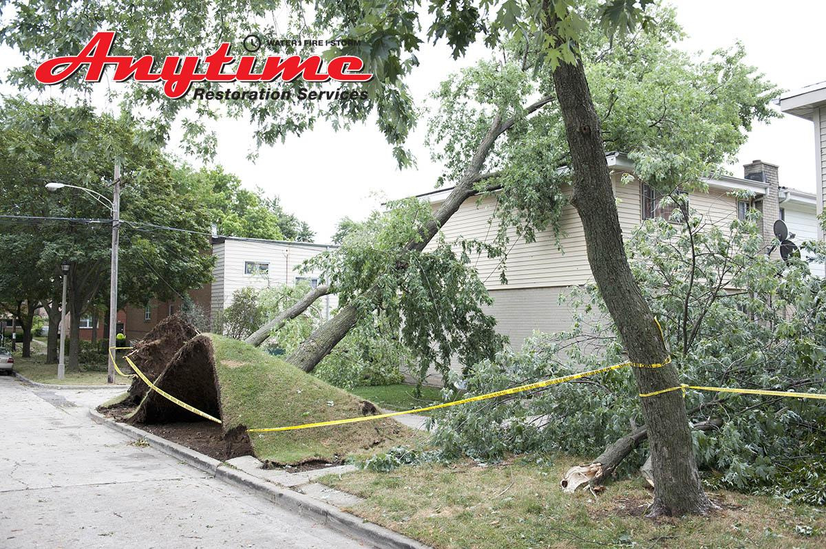 Certified Wind Damage Cleanup in Algonac, MI