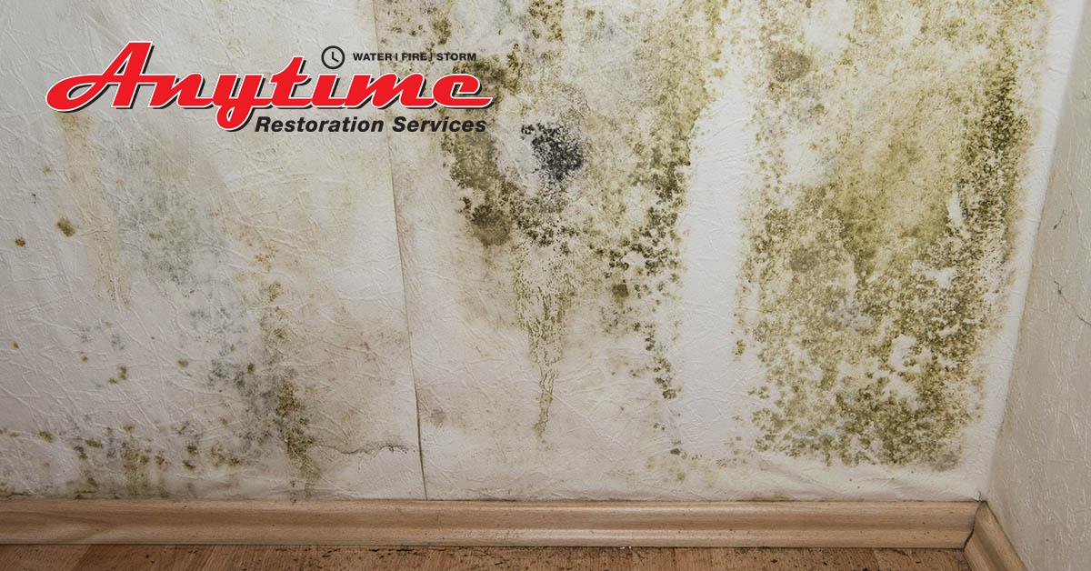 Certified Mold Removal in Richmond, MI