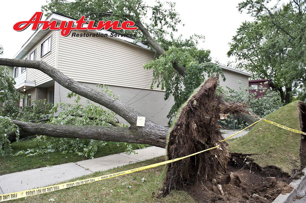 Certified Wind Damage Cleanup in Utica, MI