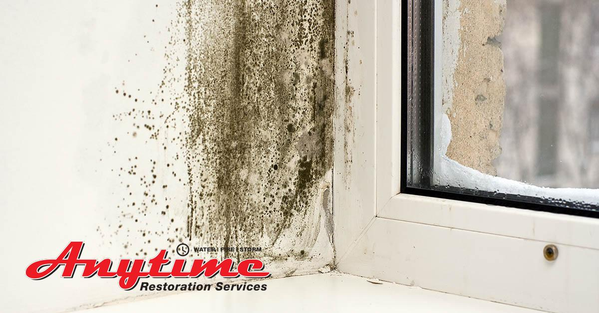 Certified Mold Abatement in St. Clair, MI