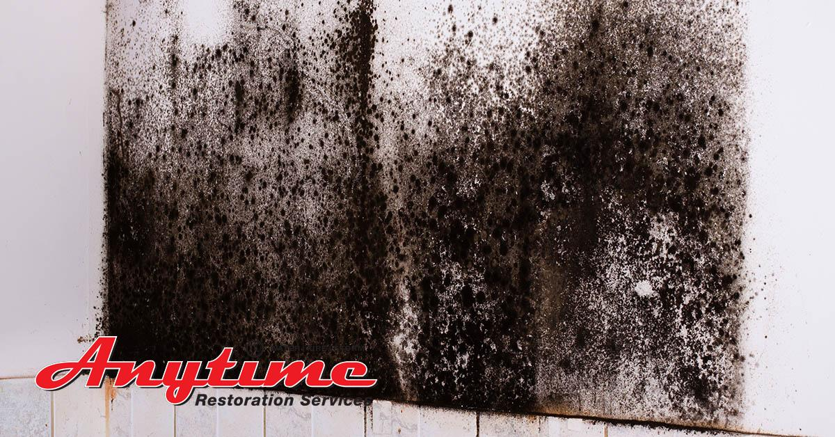 Certified Mold Abatement in New Haven, MI