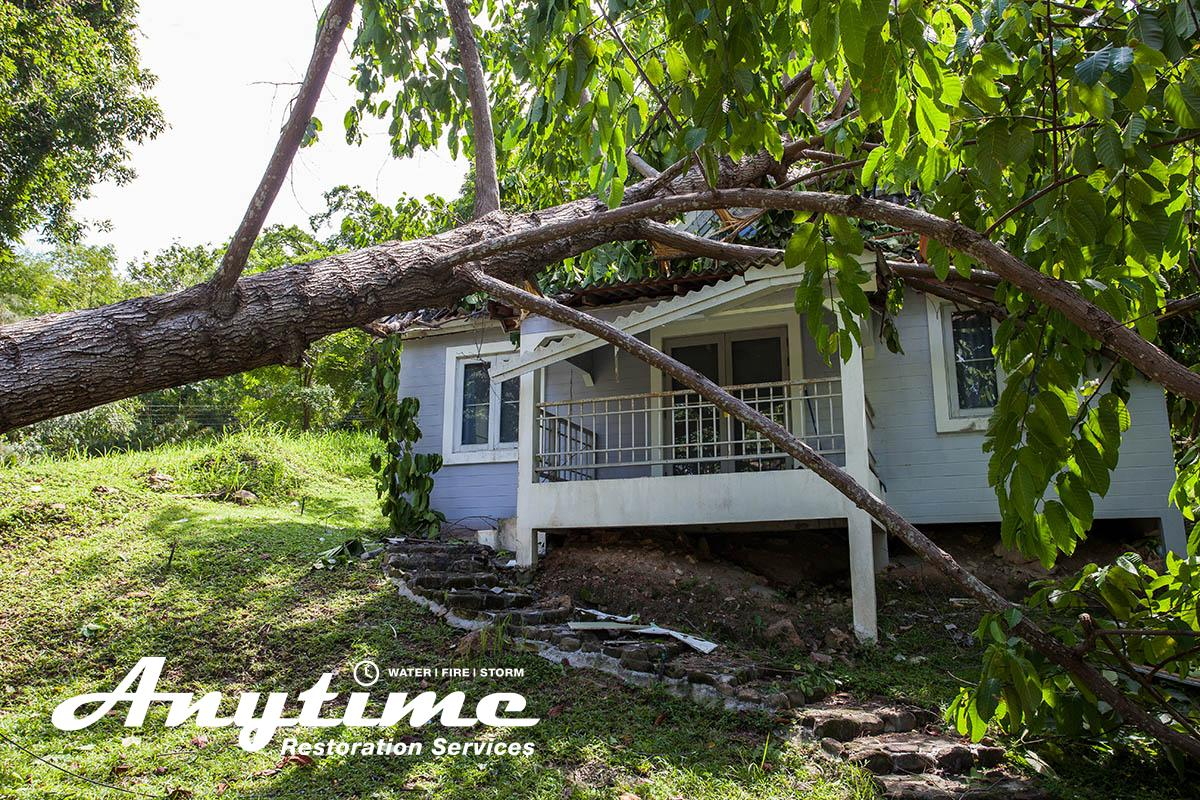 Full-Service Wind Damage Restoration in Livonia, MI